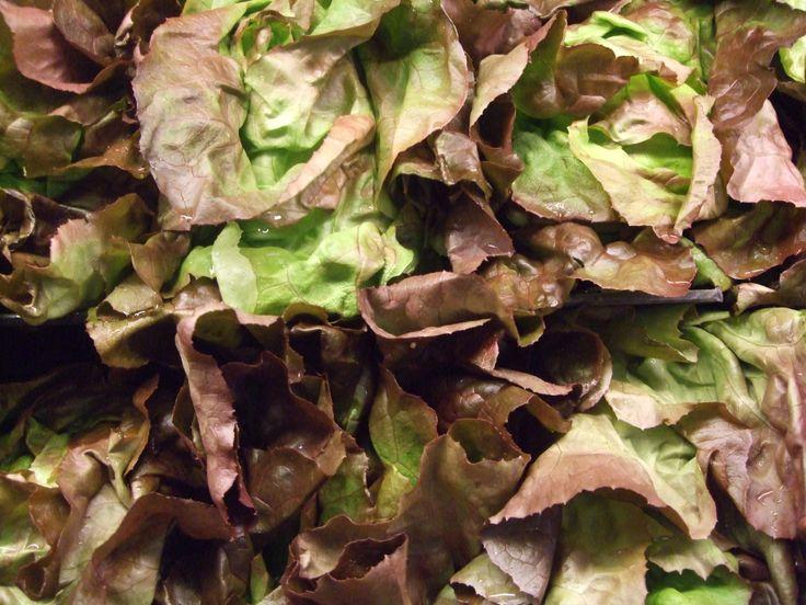 leafygreenstri-doshic