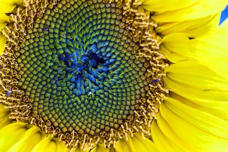 sunflowerseedstri-doshic