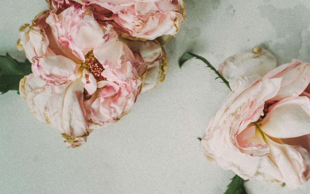 Rose Petal Recipes: Rose Lassi, Rose Milk, Rose Thirst Quencher